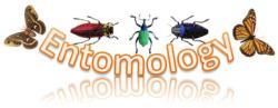Etmology